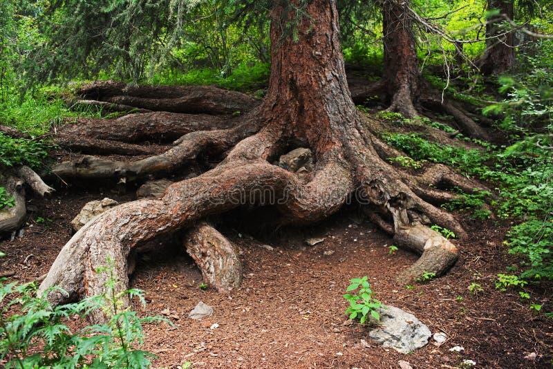 sörja rotar treen royaltyfri bild