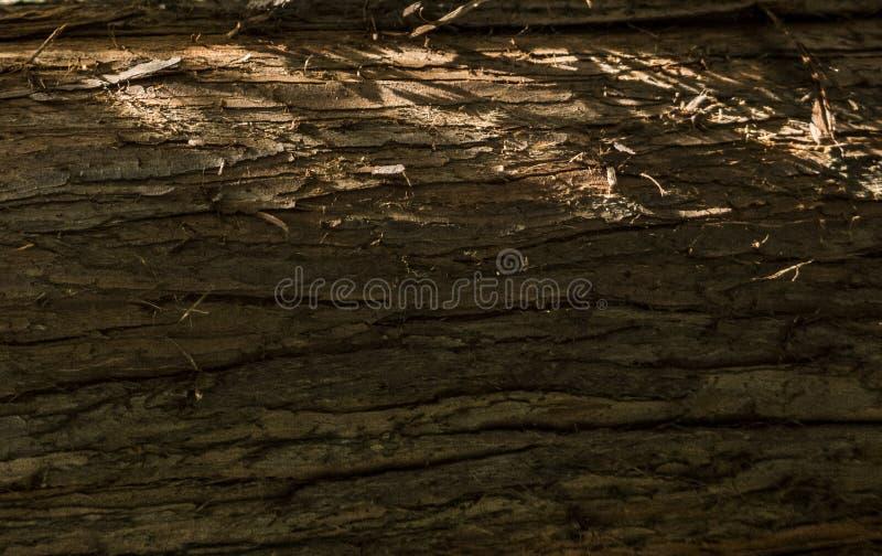 Sörja skället i slut för solnedgångljusträd upp trätexturbakgrund royaltyfria bilder
