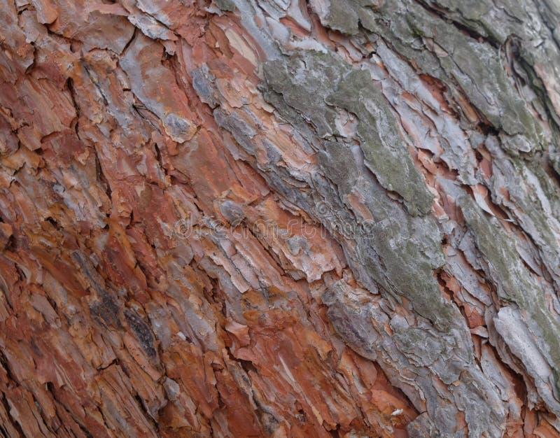 Sörja skället på ett träd i skogen arkivfoto