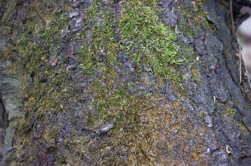 Sörja skället som täckas med grön mossamakro royaltyfria bilder