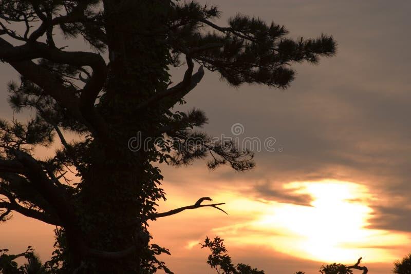 sörja solnedgången royaltyfri foto