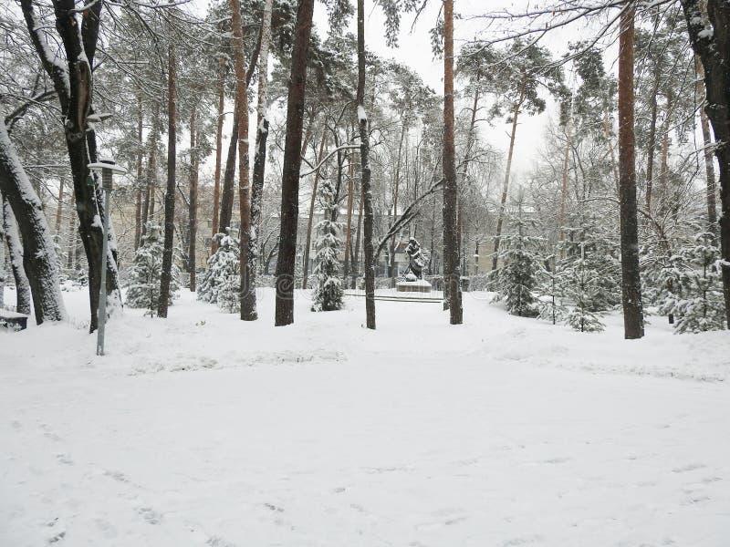 SÖRJA TILLVÄXT I VIT SNÖ, KRÖKTA TRÄD fotografering för bildbyråer