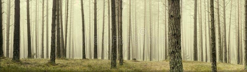 Sörja träd