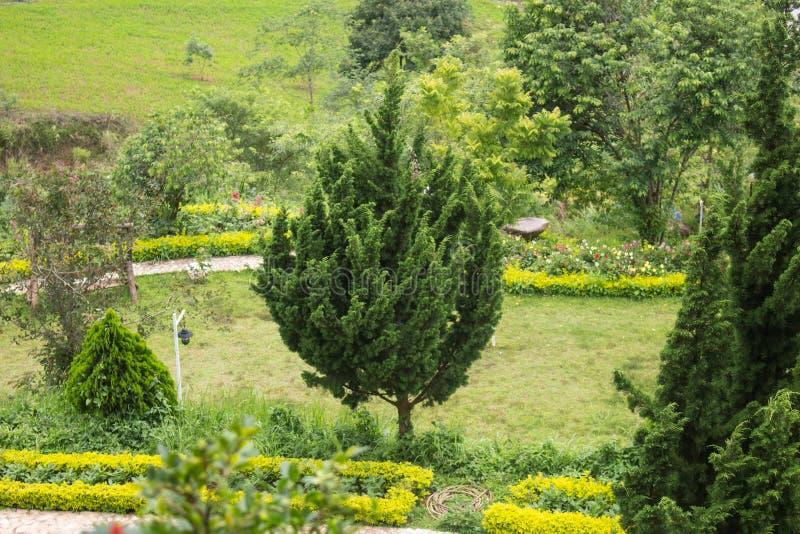 Sörja träd med grönt gräs i trädgården royaltyfria bilder