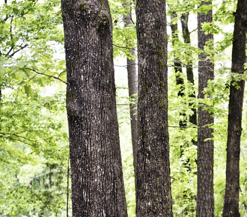 Sörja träd och diverse lövfällande variationer i litet forested område arkivfoton