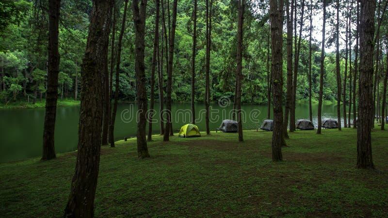 Sörja träd och fördelande fält på Pang Ung royaltyfria bilder