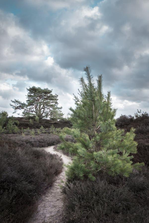Sörja träd på en molnig dag med en bana som tillsammans kommer med dem royaltyfria foton