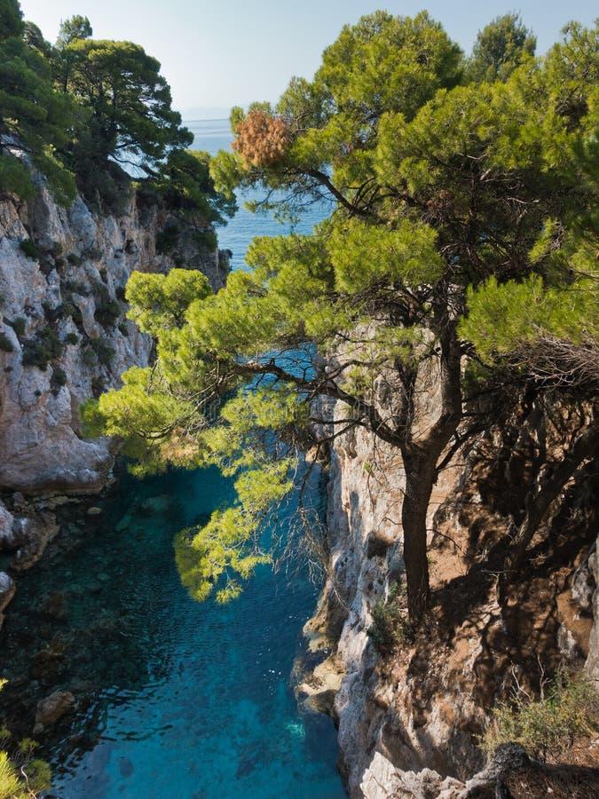 Sörja träd på en vagga över kristallklart turkosvatten nära udde Amarandos på den Skopelos ön arkivbild
