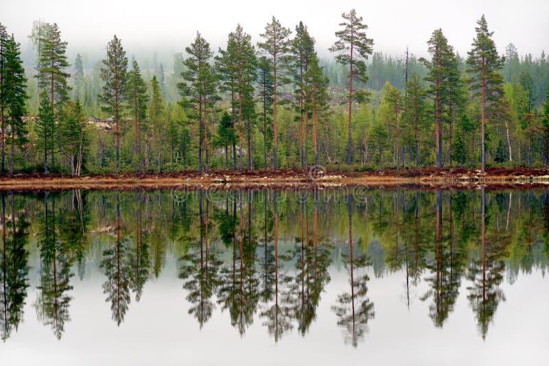 Sörja träd reflekterade i tarn arkivbilder