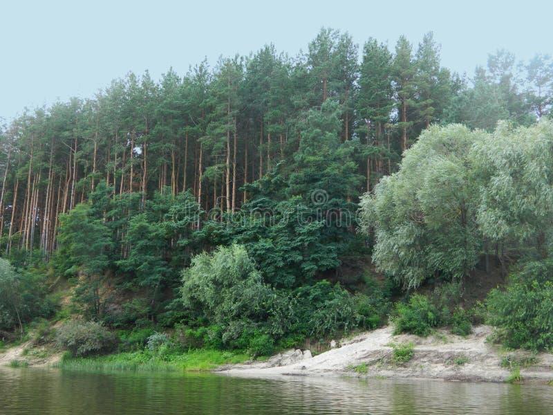 Sörja-träd skog och lite sandig strand på flodstranden royaltyfri bild
