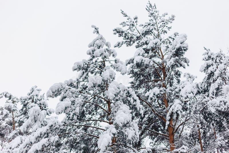 Sörja trädet i snöräkningen arkivfoto