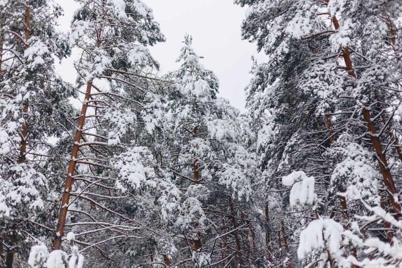 Sörja trädet i snöräkningen arkivbild