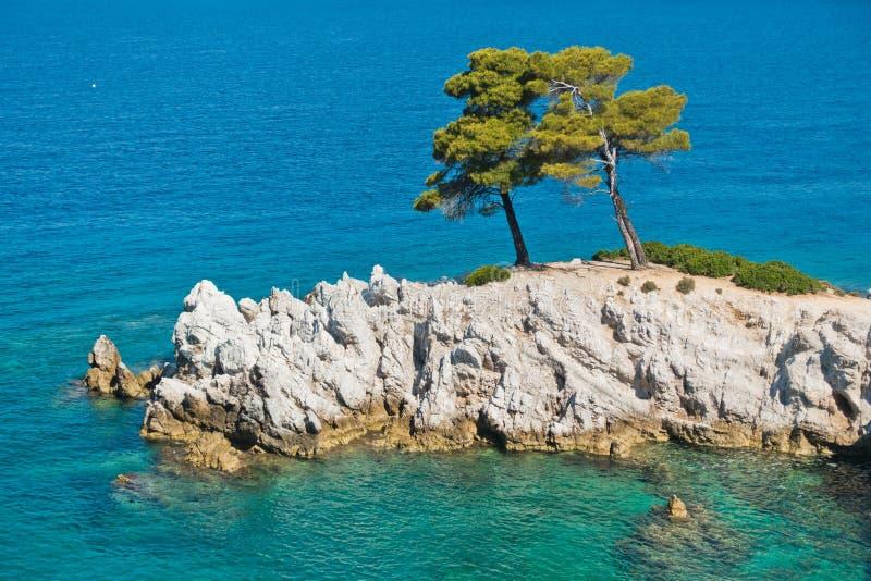 Sörja trädet på en vagga över kristallklart turkosvatten, udde Amarandos på den Skopelos ön arkivbild