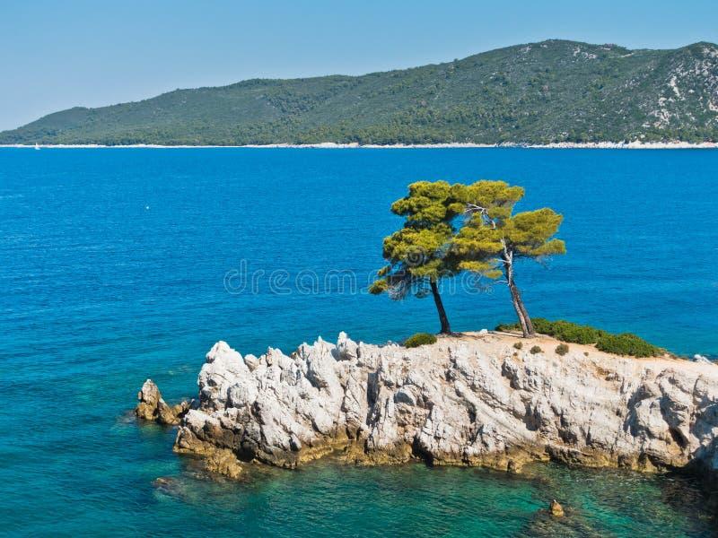 Sörja trädet på en vagga över kristallklart turkosvatten, udde Amarandos på den Skopelos ön royaltyfria bilder