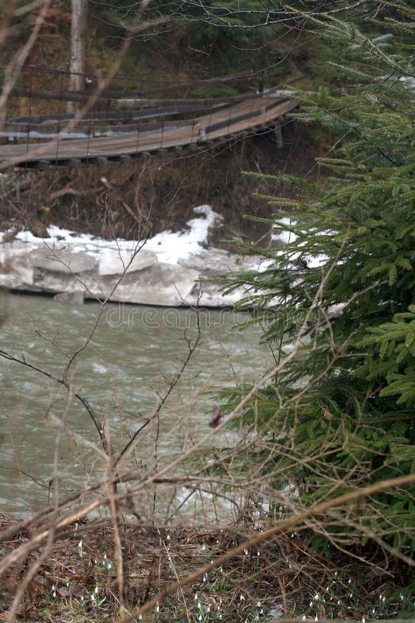 Sörja trädet på flodstranden med träupphängningbron arkivfoton