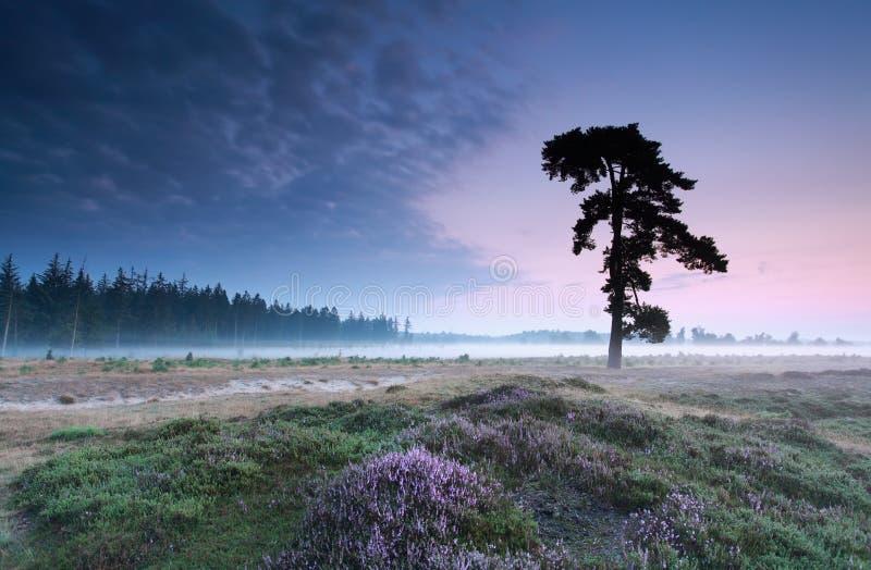 Sörja trädet på heathland i sommar arkivfoto