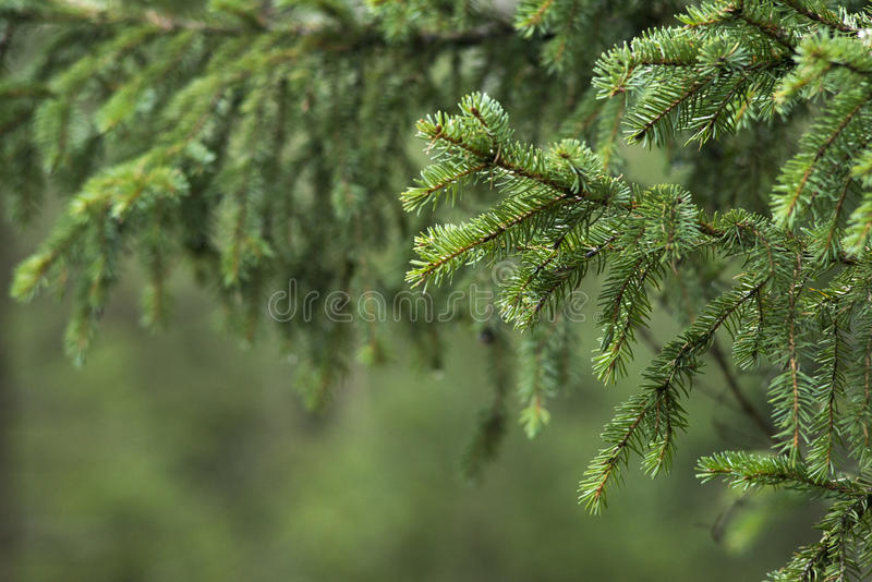 Sörja trädfilialen arkivbilder