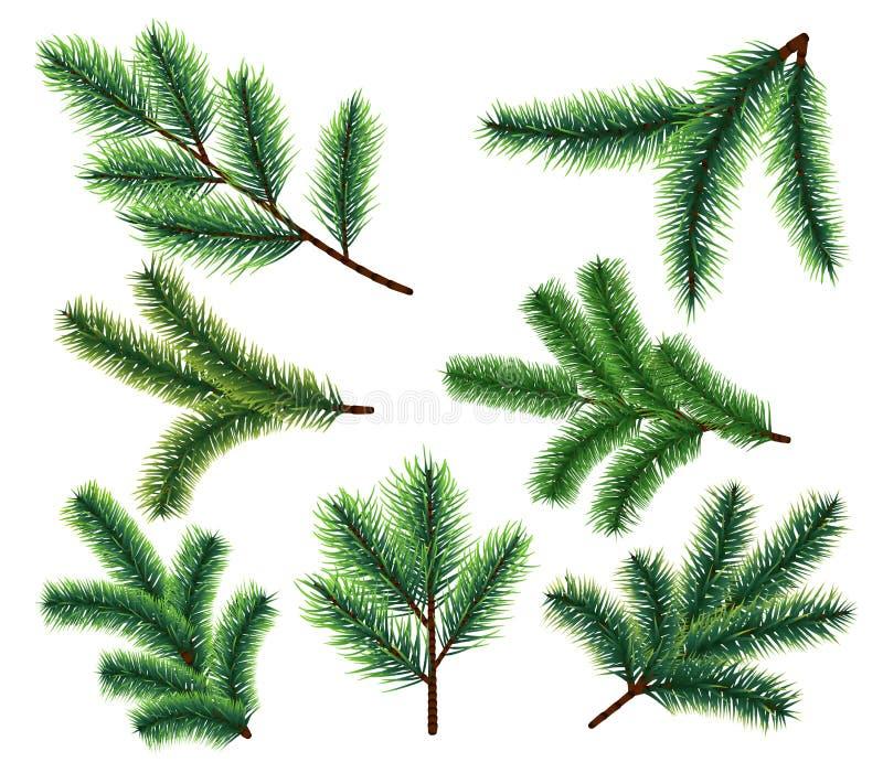 Sörja trädfilialer Filial för julgranträd Beståndsdelar för vektorxmas-decorarion royaltyfri illustrationer