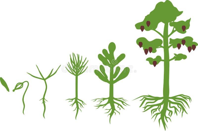 Sörja trädlivcirkuleringen vektor illustrationer