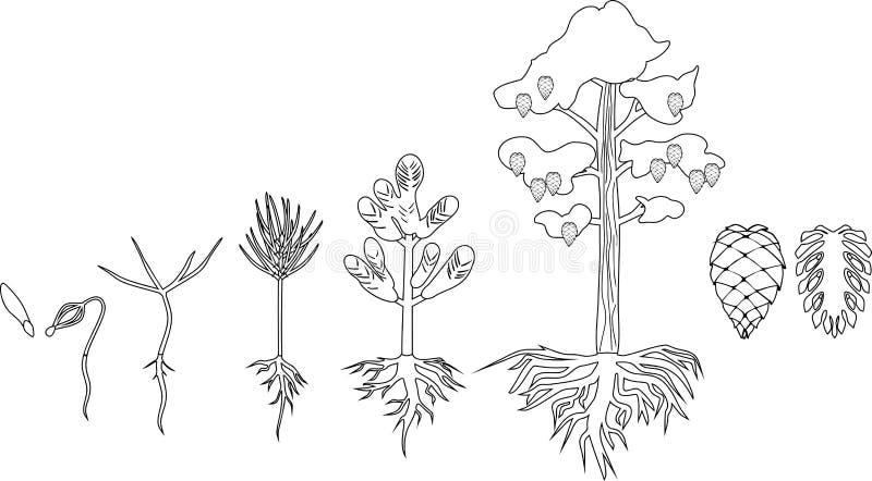Sörja trädlivcirkuleringen stock illustrationer