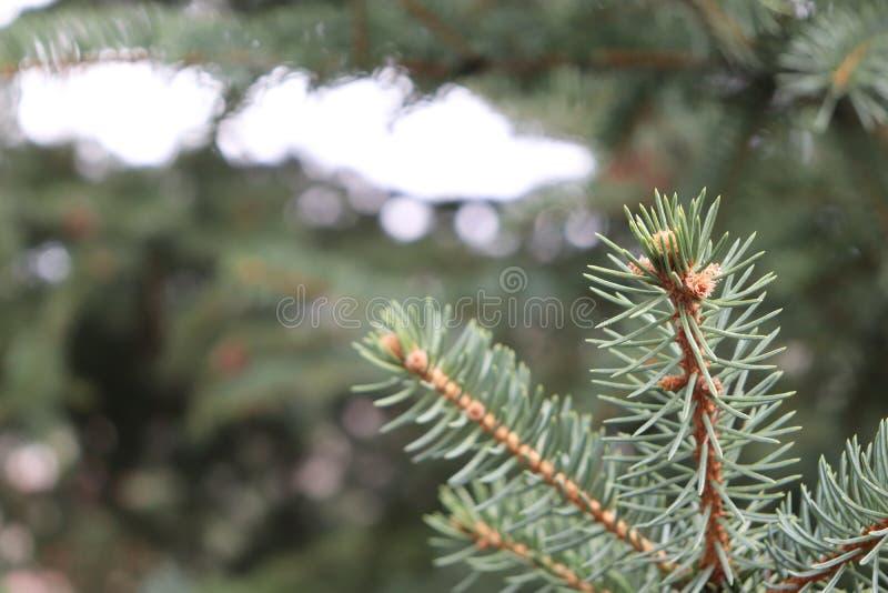 Sörja trädmakrozoomen med ljus i avstånd fotografering för bildbyråer