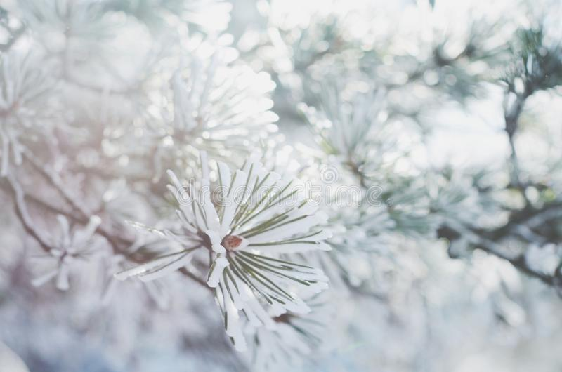 Sörja trädris i snö, vinterbakgrund royaltyfria foton