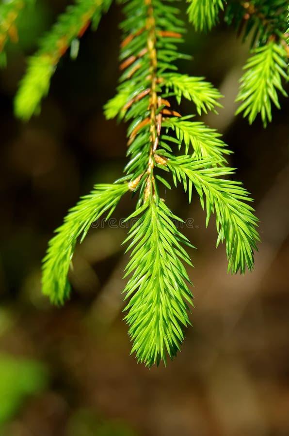 Sörja trädsidor royaltyfria bilder