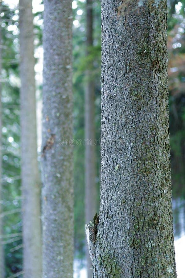 Sörja trädskället arkivbild