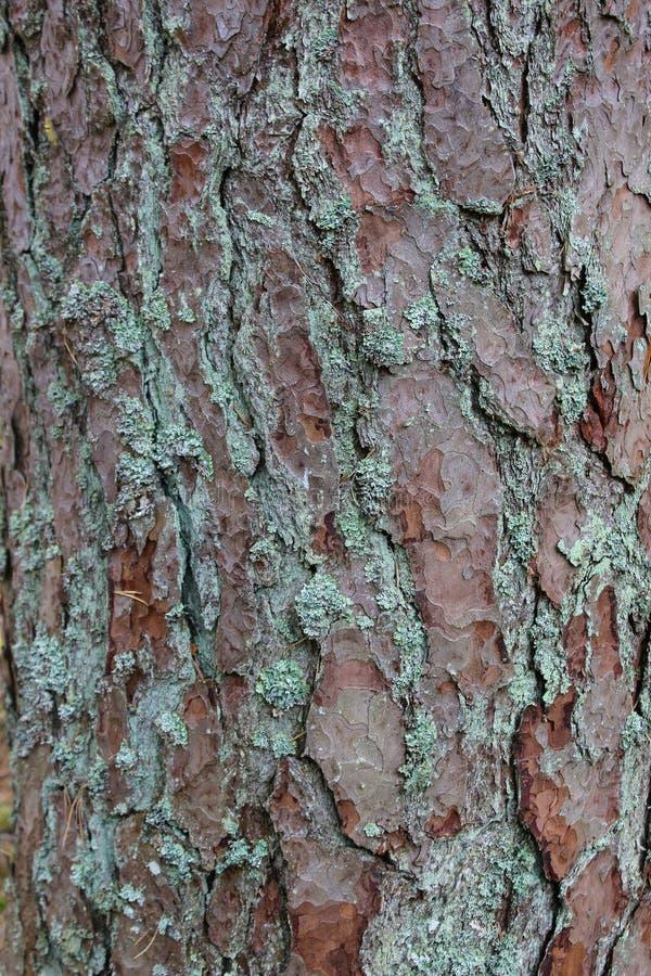 Sörja trädskället royaltyfri foto