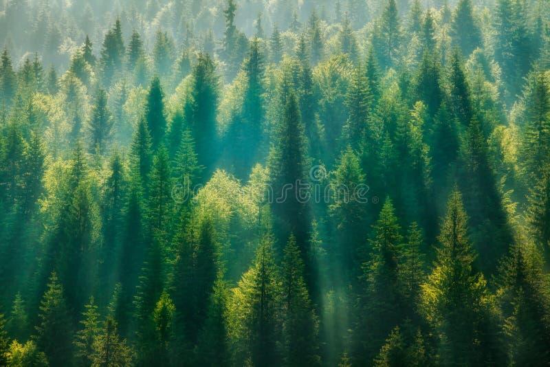 Sörja trädskogen arkivfoto