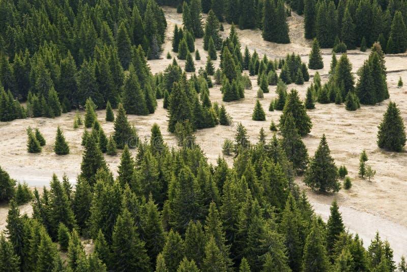 Sörja trädskogen på bergdalen royaltyfria bilder