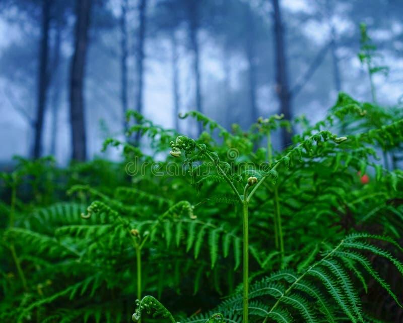 Sörja trädskogen på den dimmiga dagen fotografering för bildbyråer