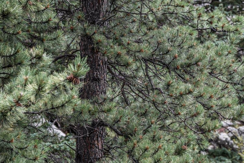 Sörja trädstammen royaltyfria bilder