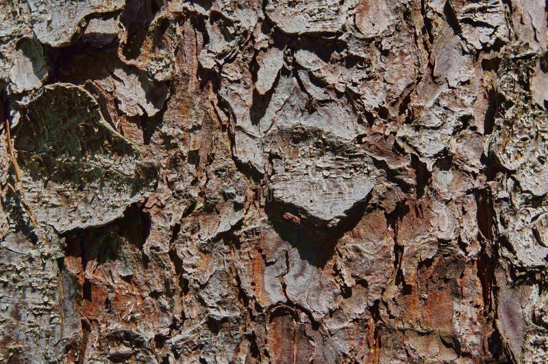 Sörja trädtextur royaltyfri fotografi
