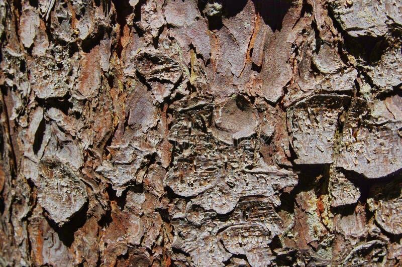 Sörja trädtextur 2 arkivfoton