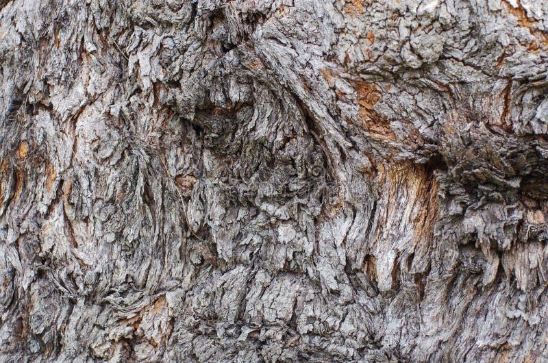 Sörja trädtextur, det knäckte trädet, gammal trädhud royaltyfri foto