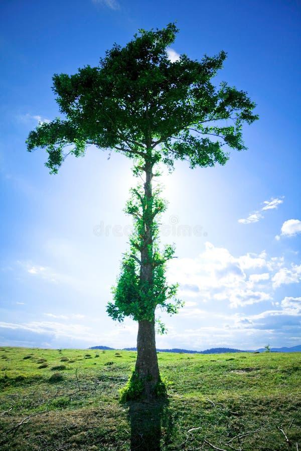 sörja treen royaltyfri bild