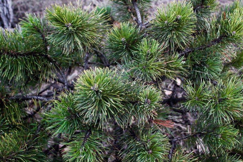 Sörjagräsplanlövruskorna royaltyfri fotografi