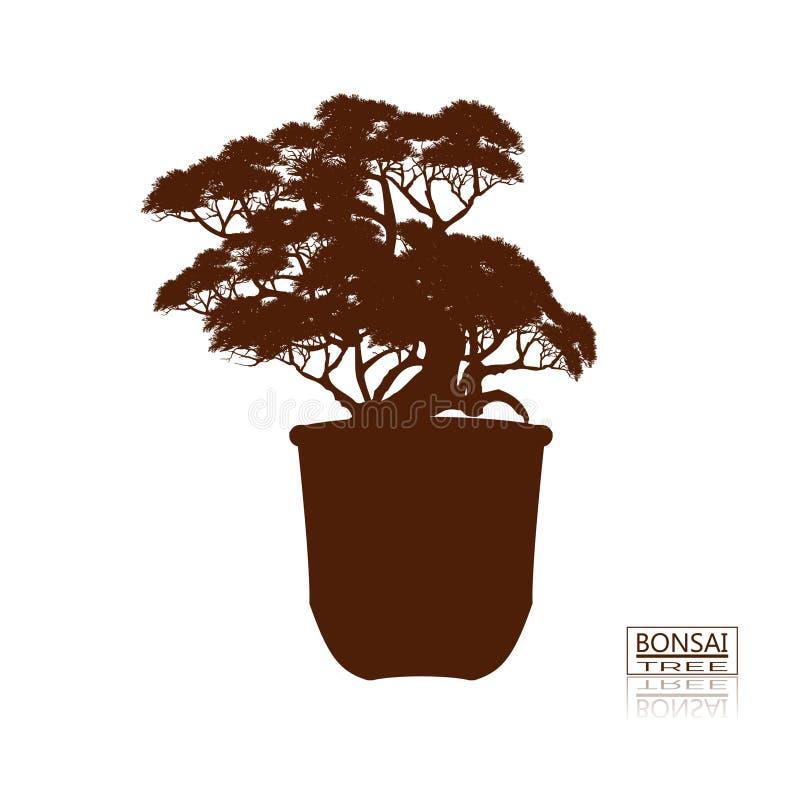 sörjer den vintergröna miniaturen för bonsai treen Tappning Realistisk stil Detaljerad bild, vektorillustration Dekorativa konste royaltyfri illustrationer