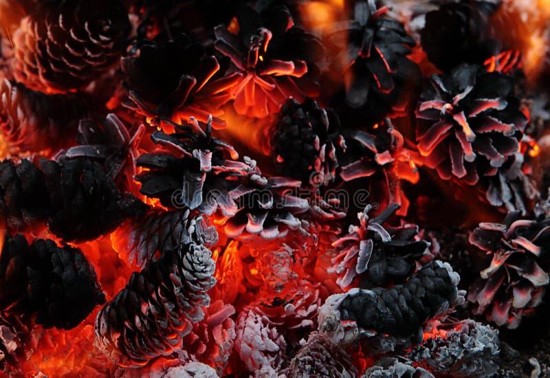 Sörjer härlig brännande lägerbrand för closeupen med kottar royaltyfri foto