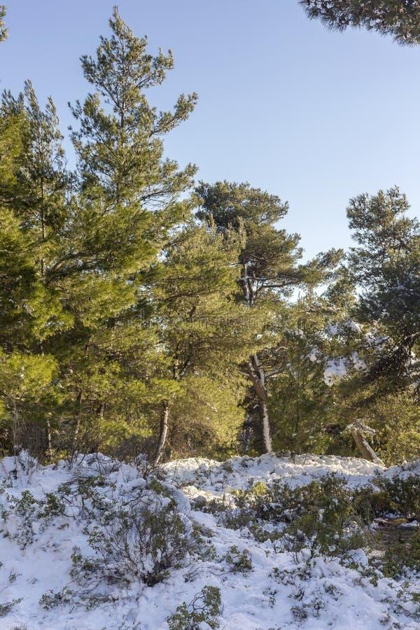 Sörjer och insnöat bergen Grekland royaltyfri foto