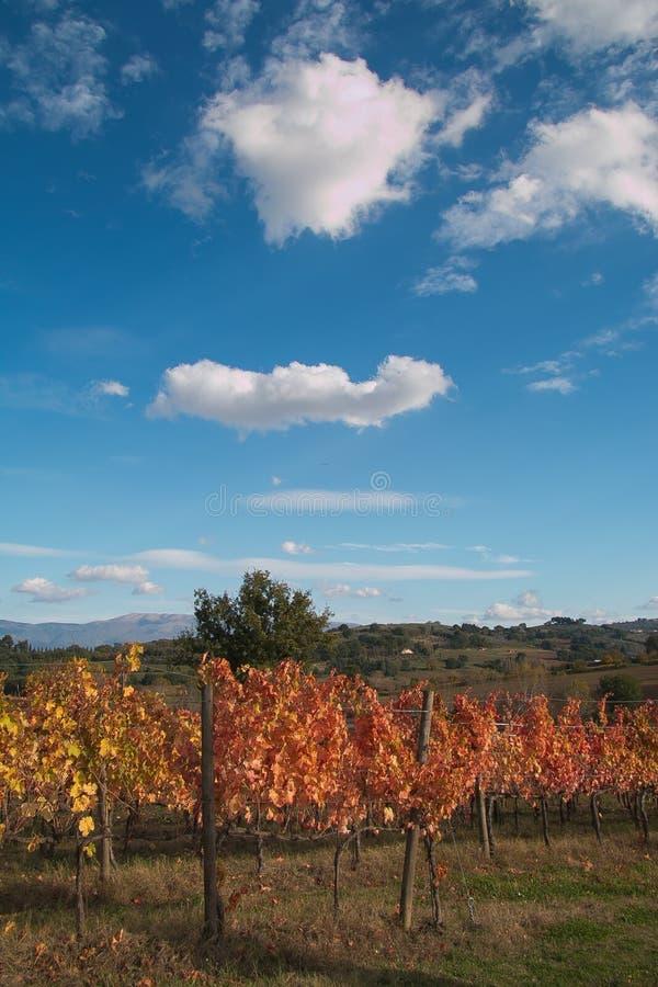 Sörjer och vingårdar i Italien arkivfoto
