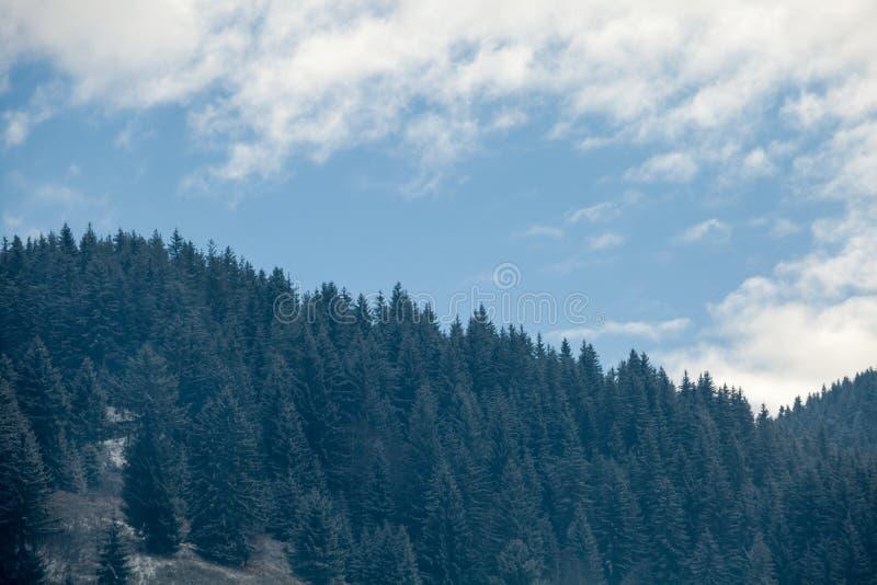 Sörjer på berg i vintertid arkivfoton