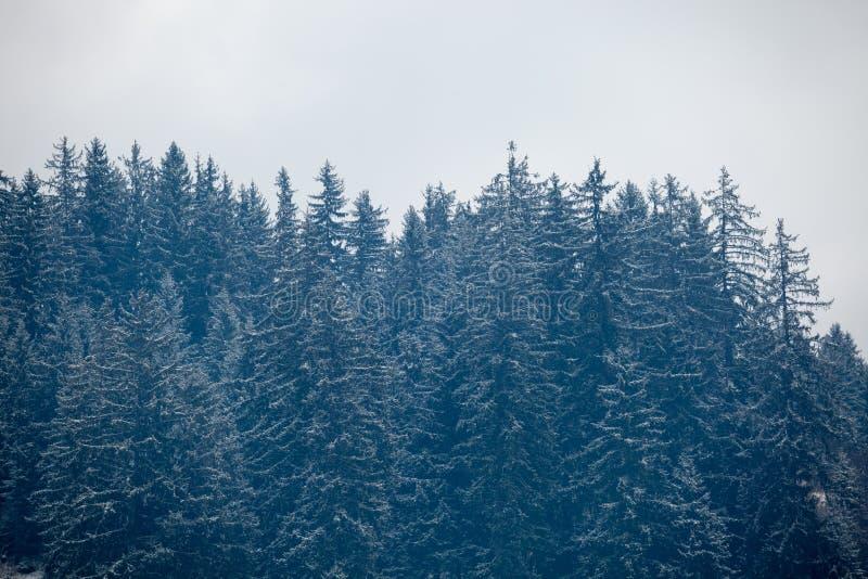 Sörjer på berg i vintertid royaltyfri fotografi