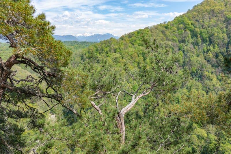 Sörjer på en grön bergssida i vår arkivbild