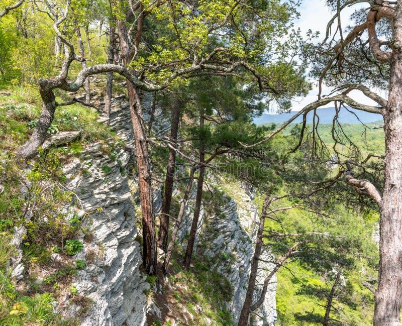 Sörjer på en grön bergssida i vår royaltyfri foto
