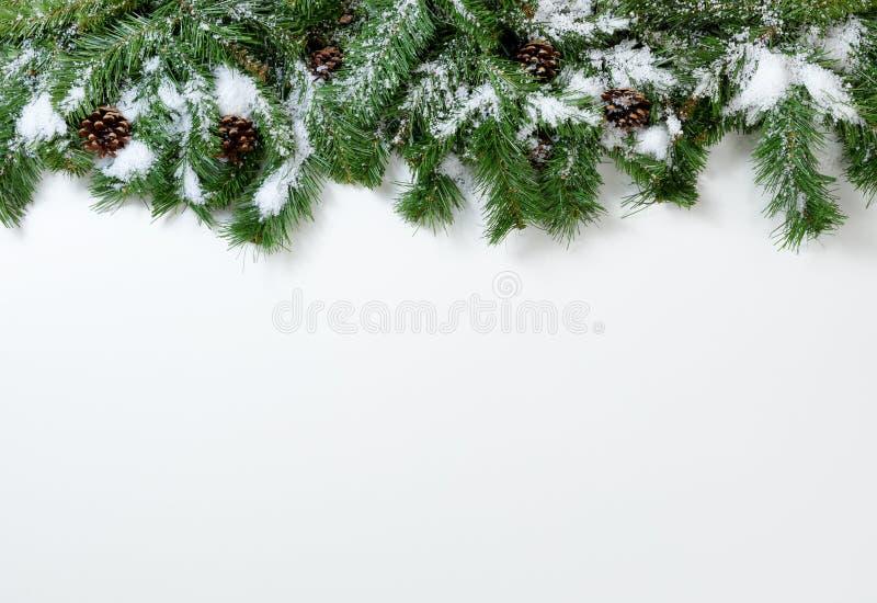 Sörjer snöig trädfilialer för jul och kottar på vit bakgrund arkivbilder