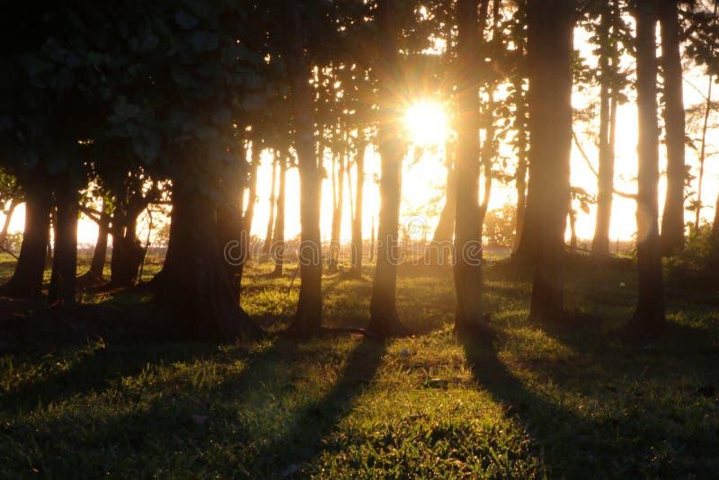Sörjer träd med varmt solnedgångljus och softness i naturbakgrund arkivfoton