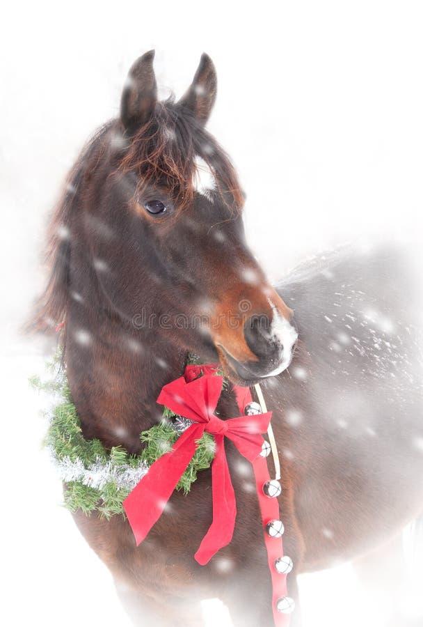 Söt arabisk häst med en julkrans royaltyfria bilder