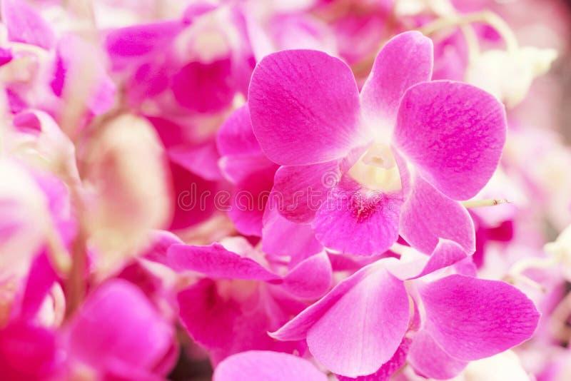 Söt blom- bakgrund, purpurfärgad orkidéblomma med den mjuka fokusen arkivfoto